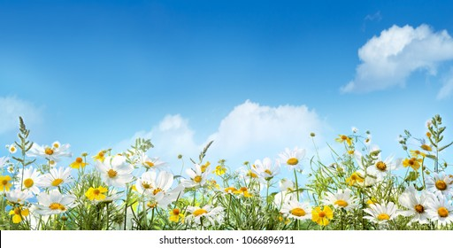Field of daisy flower and grass against sky
