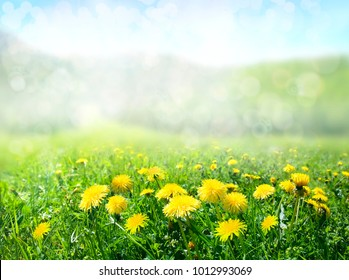 The field of dandelions. Nature background.