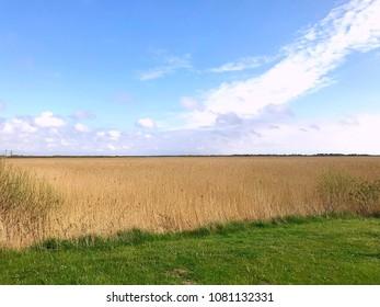 Field in Rømø in Danmark