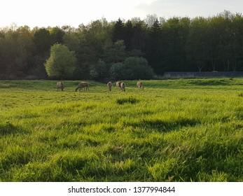 field with deer
