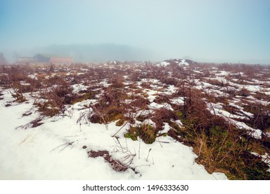 Field with dry grass covered with first snow. Rural landscape. Early misty morning in the field