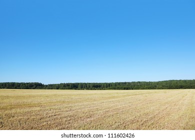 field with dry grass near wood