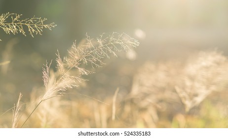A field in evening. Bright and warm tone. Shallow DOF. Light from above. Soft and blur nature background.