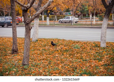 field with fallen leaves on the road on which sits a black raven