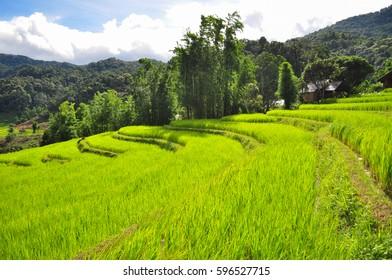 field farm thailand