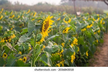 Field of Flower background, Natural background