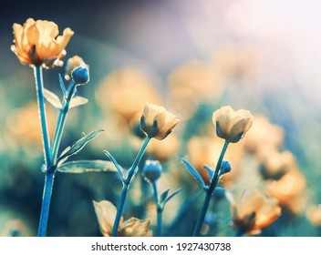 Field flower in nature on sunlight. Floral vintage and toning with filter effect