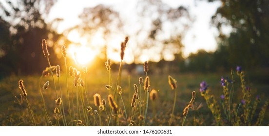 Field flower on a green meadow in spring or summer evening in sunset with golden hour, website banner template style with copy space