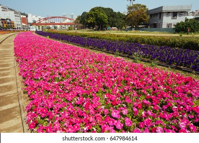field of flower in the park at Taiwan