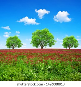 Field of flowering crimson clovers (Trifolium incarnatum) in sunny day. Spring landscape with trees and blue sky with clouds.