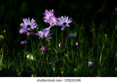 Field flowers - Shutterstock ID 378253198