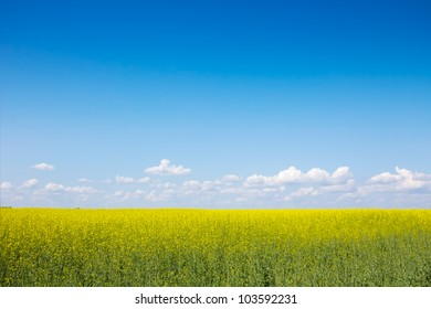 The field of  flowers against the blue sky and white clouds