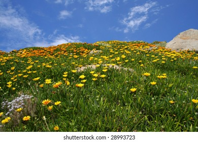 field of flowers against a blue sky