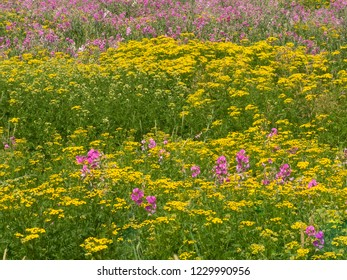 Field of flowers as a background in early spring
