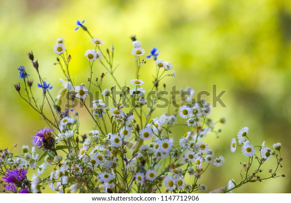 Field flowers chamomile and cornflower. Beautiful flower natural green background. Nature summer floral plants wallpaper
