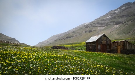 Field of flowers (mostly, dandelion). You can see some mountains behind with fog. Some constructions made of wood are placed in the centre of the pictura and on the right. Patagonia, Argentina