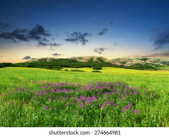 Field with flowers in mountain valley. Agricultural landscape
