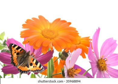 Field flowers of pink and orange color on a light background.