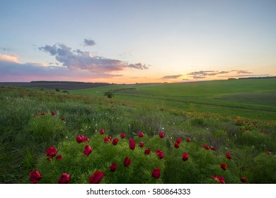 Field with flowers, red and white flowers on a background of sunset sky.