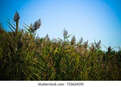 Field flowers in summer