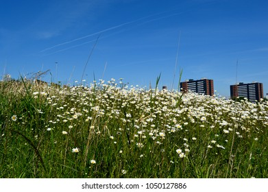 A field of flowers under a blue sky in an urban environment