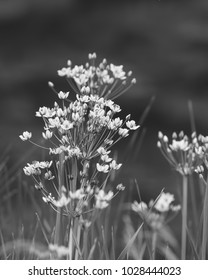 Field flowers vertical black and white photo