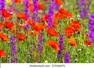 Field of flowers.Spring abstract background.Nature.