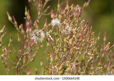 field fluffy dry autumn flowers