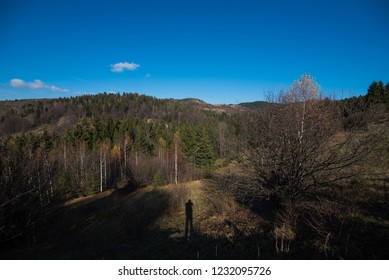 field and forest landscape