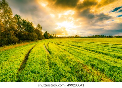 Field in the forest with wheel tracks at sunset and autumn sky. Image vignetting and the blue-yellow toning