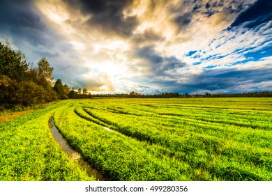 Field in the forest with wheel tracks at sunset and autumn sky