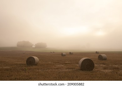 field in the French Jura region in morning mist