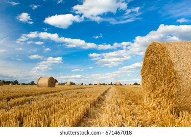 A field a freshly cut hay with round bales set against a blue sky