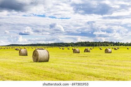 Field full of hay balls at bright summer day
