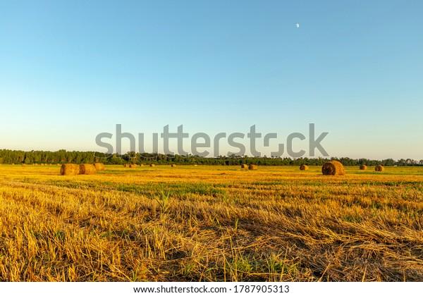 field-grain-straw-bales-600w-1787905313.