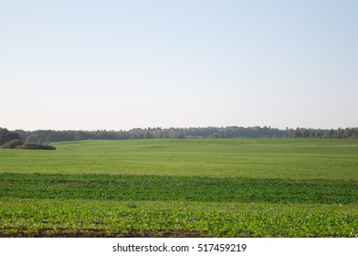 The field with grass and blue sky.
