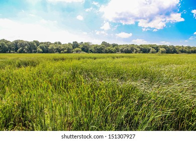 A field of grass during a sunny summer day