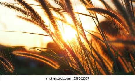 Field of grass during sunset, magical meadow background