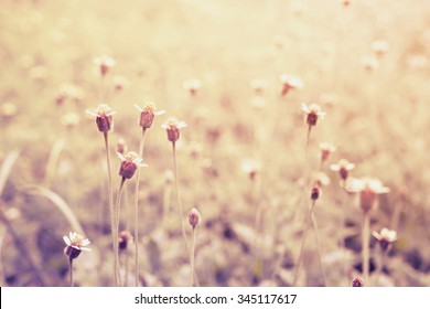field of grass flower at sunset ; vintage filter
