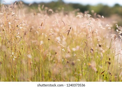 Field of grass flowers at Pha Tam National Park, Ubon Ratchathani, Thailand