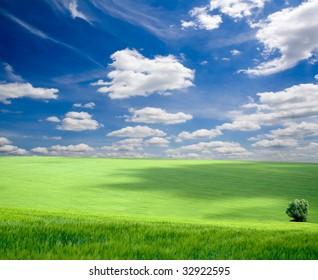 field of grass. meadow green under sky