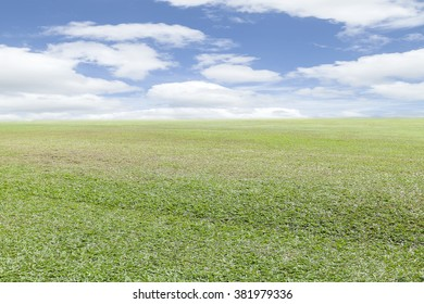 Field grass in the morning with blue sky background