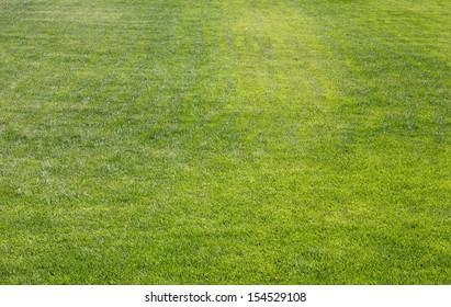 Field of grass in a neighborhood park
