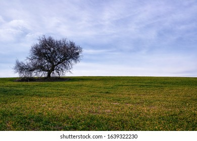Field of grass and Old dry  tree  and blue sky background.