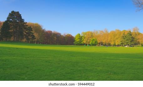 Field of grass. Photo taken in the Laeken Park located in Brussels, Belgium