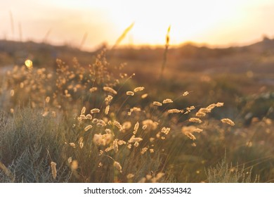 Field of grass with sea and hills on background  during sunset