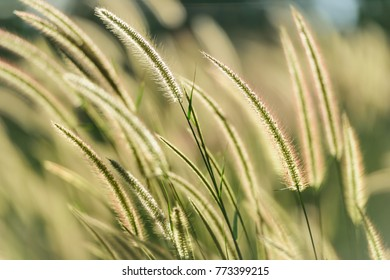 Field of grass in soft focus