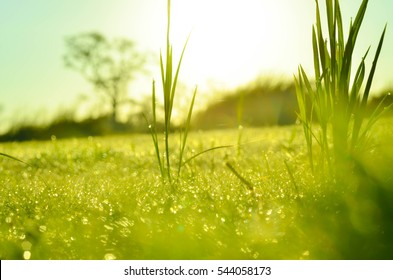 field of grass and sun in morning