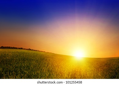 field of grass and sunset