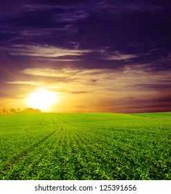 field of grass and sunset. Beautiful blue sky and white clouds. Deep blue sky and clouds. Green Field. wonderland.